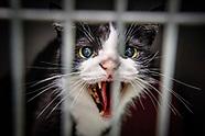 serie asiel dierenbescherming