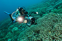 Diver with an underwater video housing, Yapen, West Papua, Indonesia.
