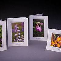 This collection features NH state symbols: the lilac, karner blue butterfly, pink lady's slipper, and the pumpkin.  The set includes two of each design, a total of 8 cards.<br /> <br /> Artemis Photo Greeting Cards featuring NH native flora and fauna and historic sites. The cards are made exclusively in NH made from 100% FSC recycled paper, manufactured with wind and water power, and are archival acid free paper. Each card includes details on the back about the image, including interesting anecdotes, historic facts, conservation status, and recipes.