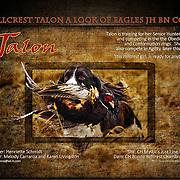 Talon Ad for Springer Showcase, performance edition.  Photo illustration.
