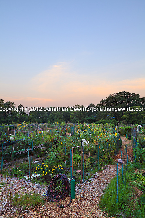The sky lightens just before sunrise at the Newark Street Community Garden in Washington, DC. WATERMARKS WILL NOT APPEAR ON PRINTS OR LICENSED IMAGES.