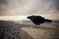 A pigeon poses atop the Empire State Building in New York City, NY, USA.