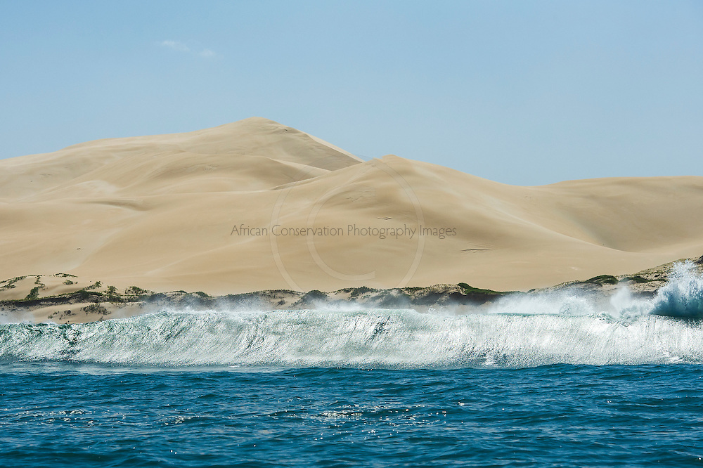 Alexandria Dunefields as viewed from the sea, Alexandria Dunefields,  Algoa Bay, Eastern Cape, South Africa
