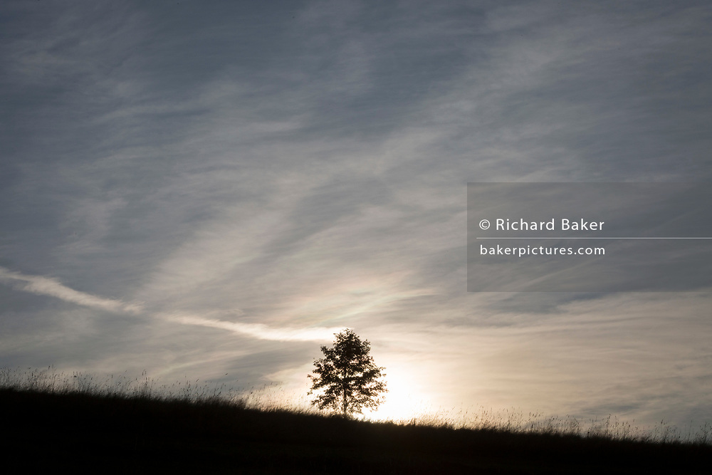 A single rowan tree (mountain ash) silhouetted against a rising sun, on agricultural land on 16th September 2019, in Koscielisko, Zakopane, Malopolska, Poland.