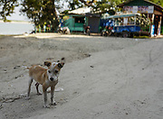 A small puppy stands in a dirt road in Mingun, Myanmar.