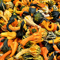 Ornamental Gourds at Farmers Market in Montreal, Canada