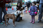 December 8, 2013 - Brooklyn, NY. Trixie the blind pitbull takes in a skeptical look from a girl visiting Windsor Terrace location of Sean Casey Animal Rescue. 12/8/2013 Photograph by Nathan Place/NYCity Photo Wire