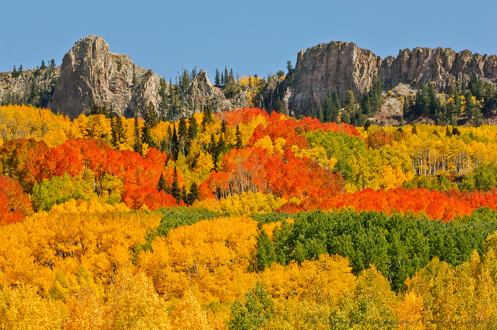 Ruby Range & aspens [Populus tremuloides]  in full autumn color; Kebler Pass, Colorado