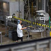 Nederland Giessen 26 augustus 2009 20090826 ..Serie over levensmiddelensector                                                                                      .HAK fabriek, werknemer monitoort het productieproces van de machine die de potjes voorziet van deksels onder hoge druk en hitte.  Employee controling machine, verwerking, verwerkingsbedrijf, voeding, voedsel, voedsel en warenwet, voedselproductie, voedselproduktie, voedselveiligheid, vrouw, werk, werken, werkkleding, werknemer, werknemers, witte jassen, woman, worker, workers, zilveruitje, zilveruitjes, zonder handschoenen..Foto: David Rozing