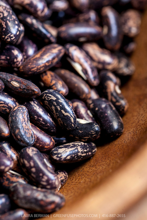 Dried, heirloom 'Blue Jay' beans.
