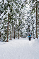 A woman cross country skiing along a groomed trail through snow covered trees. Cabin Creek Snowpark, Washington Cascades, USA.