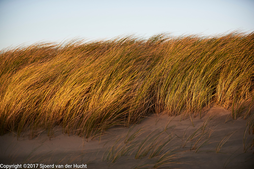 Duinen langs de kust van Den Haag - Dunes along the coast of The Hague, Netherlands,