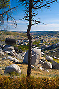 Serra da Estrela mountain range in the Natural Park. Sculptural graphic effect of glacial erratics boulders and burnt tree damaged by wildfire in 2017 in Portugal.