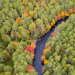 Fall colors and white pine trees along the Crooked River in Harrison, Maine.