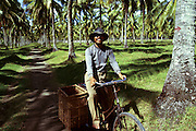 Pangandaran, Java, Indonesia- smiling man on path through palm plantation with empty baskets on his bicycle