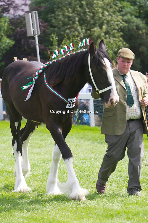 Mr &amp; Mrs R S Cockroft's black filly  Springwell Pearl<br />