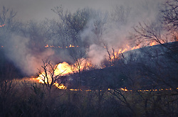 "A prescribed burning of prairie at the Flying W Ranch near Clements, Kansas travels rapidly down a hillside during ""Flames in the Flint Hills."" This agritourism event allows ranch guests to take part in lighting the prescribed burns. Prairie grasses in the Kansas Flint Hills are intentionally burned by land mangers and cattle ranchers in the spring to prepare the land for cattle grazing and help maintain a healthy tallgrass prairie ecosystem. The burning is also an effective way of controlling invasive plants and trees. The prairie grassland is burned when the soil is moist but grasses are dry. This allows the deep roots of the grasses to survive and the burned grasses on the soil surface return as nutrients to the soil. These nutrients allow for the rapid growth of new grass. After approximately two weeks of burning, new grass emerges. Less than four percent of the original 140 million acres of tallgrass prairie remains in North America. Most of the remaining tallgrass prairie is in the Flint Hills in Kansas."
