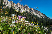 Mariposa lilies and other wildflowers are abundant in the Idaho Creek Meadow along the trail to Alpine and Sawtooth Lake.