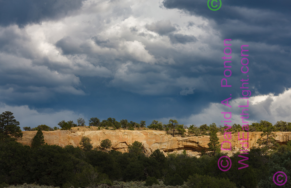 Sunlight catches a forested sandstone mesa below dramatic storm clouds, Sandoval County west of the Sierra Nacimiento, New Mexico, © 2010 David A. Ponton