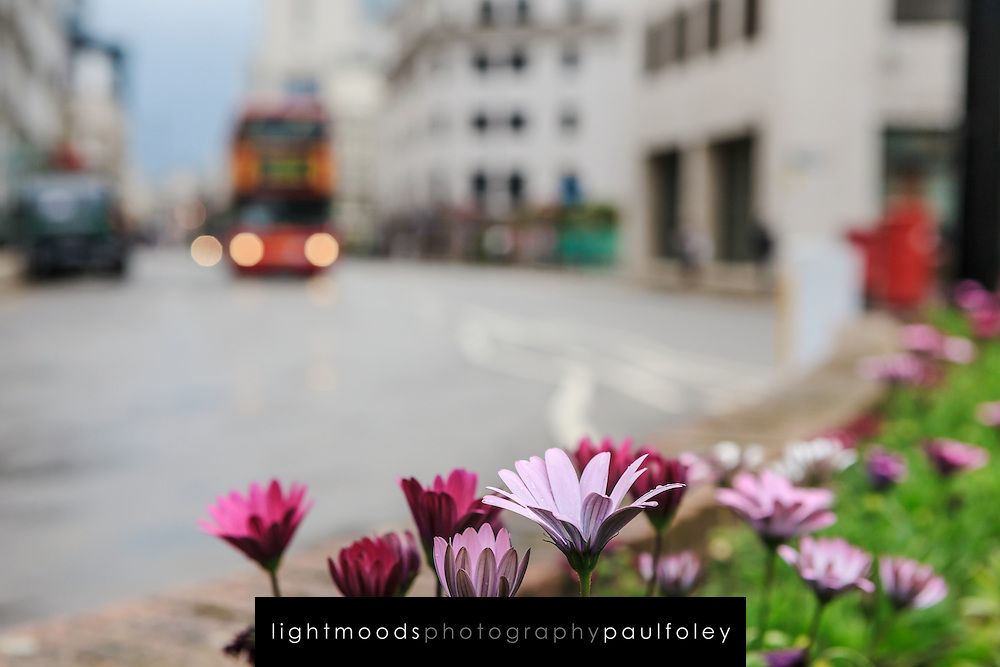 Street flowers and London Bus, UK