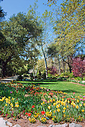 Descanso Gardens, La Canada, Flintridge, California, tranquil scene, Nature, Travel, Outdoors, Flowers, Day, Ca, Pasadena