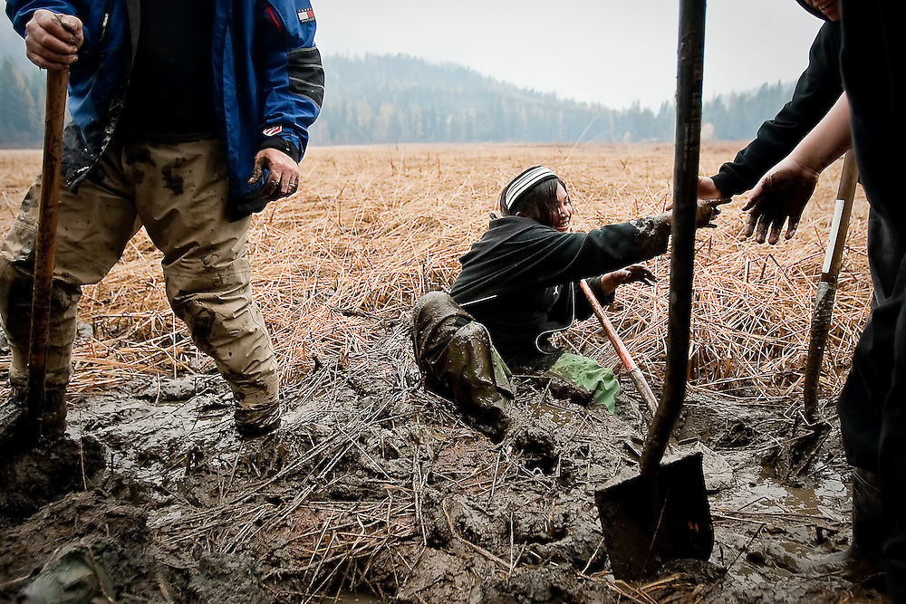 JEROME A. POLLOS/Press..Kyra Antone, 13, struggles to get out of the cold mud after falling when her waders became stuck while digging for water potatoes.