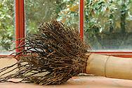 France, Languedoc Roussillon, Gard, Cévennes, Anduze, Prafrance, La Bambouseraie, racines de bambou