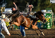 Action from the final night of the Corn Palace Stampede Rodeo on Sunday night at Horseman's Sport Arena in Mitchell. (Matt Gade / Republic)