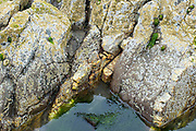 Barnacles and seaweed in rock pool on Pembrokeshire Coast at Poppit Sands, Wales