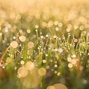"""Warm Sunlight""<br /> <br /> Beautiful golden sunlight and bokeh on spring grass!"