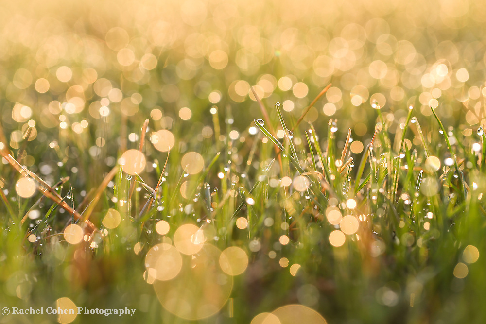 &quot;Warm Sunlight&quot;<br />