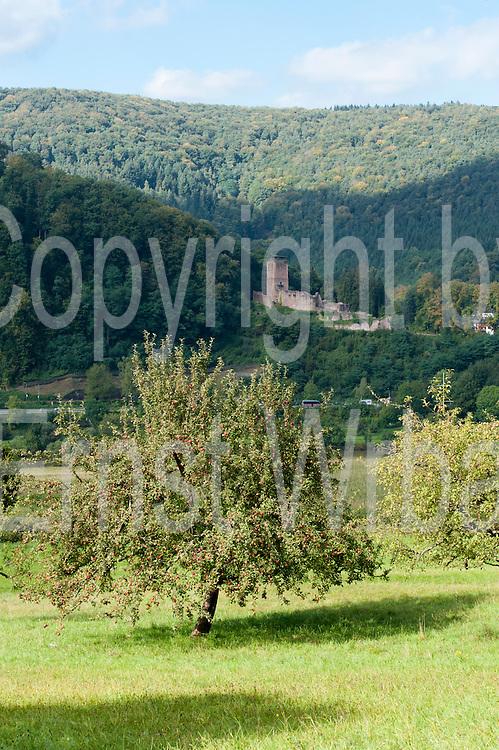 Apfelbäume, Hinterburg, Neckarsteinach, Odenwald, Naturpark Bergstraße-Odenwald, Baden-Württemberg, Deutschland | apple trees, castle Hinterburg, Neckarsteinach, Odenwald, Baden-Wuerttemberg, Germany