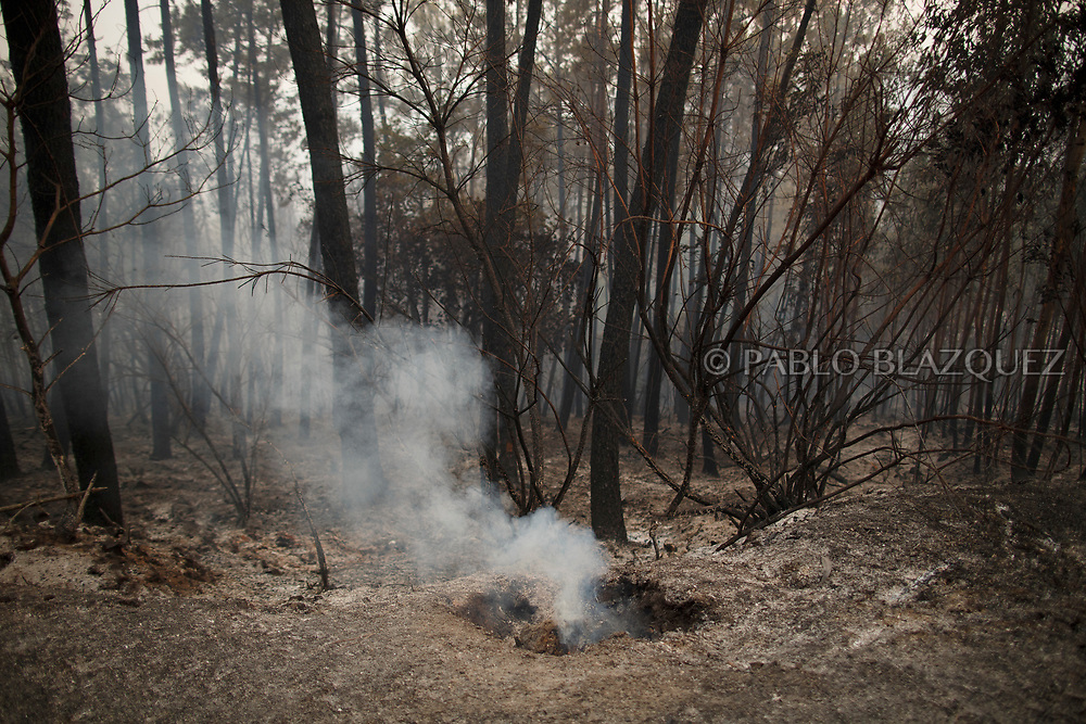 LEIRIA, PORTUGAL - JUNE 19:  Trees are burned after a wildfire took dozens of lives on June 19, 2017 near Castanheira de Pera, in Leiria district, Portugal. On Saturday night, a forest fire became uncontrollable in the Leiria district, killing at least 62 people and leaving many injured. Some of the victims died inside their cars as they tried to flee the area.  (Photo by Pablo Blazquez Dominguez/Getty Images)