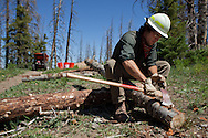 Americorps volunteer Ben Gibbins removes bark from a log that will support part of a trail in Cedar Breaks National Monument, Utah.