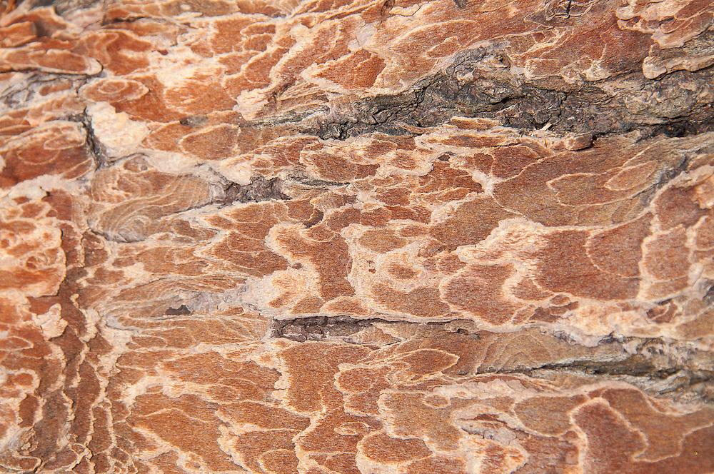 Driftwood Detail, Stuart Island, Washington, US