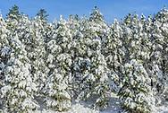 Westhampton Dwarf Pine Plains Preserve, East Quogue, NY