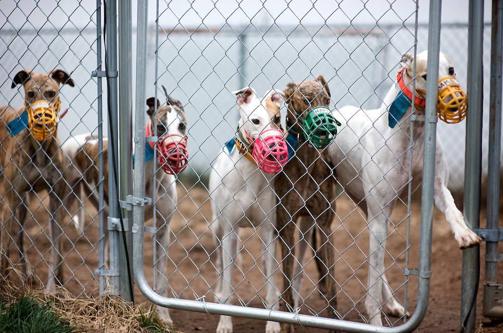 """OK. Who's first? Raise your hand!""<br /> Retired racers from the NJGAP December 2009 Adoption Intake."