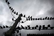20141102/ Javier Calvelo - adhocFOTOS/ URUGUAY/ MONTEVIDEO/ Casa infectada de palomas en la calle Surraco en el barrio La Blanqueada.<br /> En la foto:  Casa en el Barrio La Blanqueada. Foto: Javier Calvelo / adhocFOTOS
