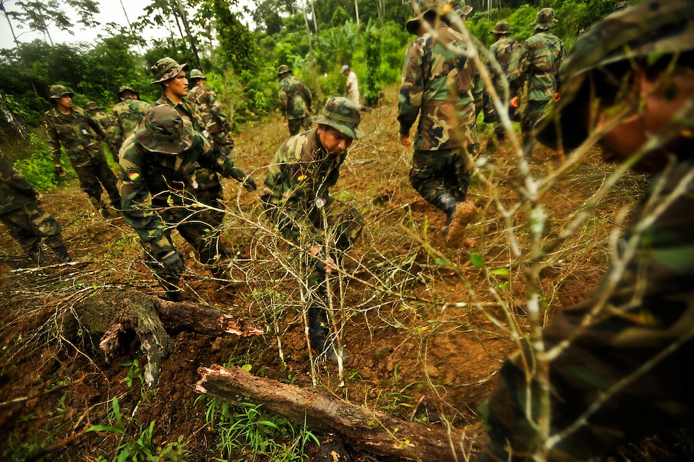 Counternarcotics forces eradicate a coca patch that was over the legal limit near the Chapare town of Ivirgarzama. Bolivia has advanced its own unorthodox approach toward controlling coca production, which veers markedly from the war on drugs and includes high tech monitoring of thousands of coca patches.  To the surprise of many, the program has significantly reduced illegal planting and without the violence that accompanied past American-backed eradication efforts here.  It's estimated that 90 percent of coca from the Chapare goes to the drug trade.