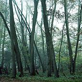 Thornham Walks, Suffolk | Colour