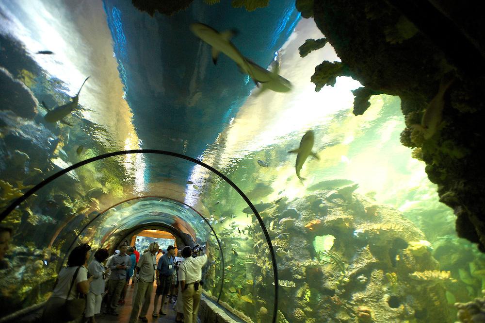 Shark Reef at Mandalay Bay.Las Vegas, Nevada
