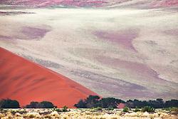 Acacia trees beneath a red sand dune, near Sossusvlei, Namibia