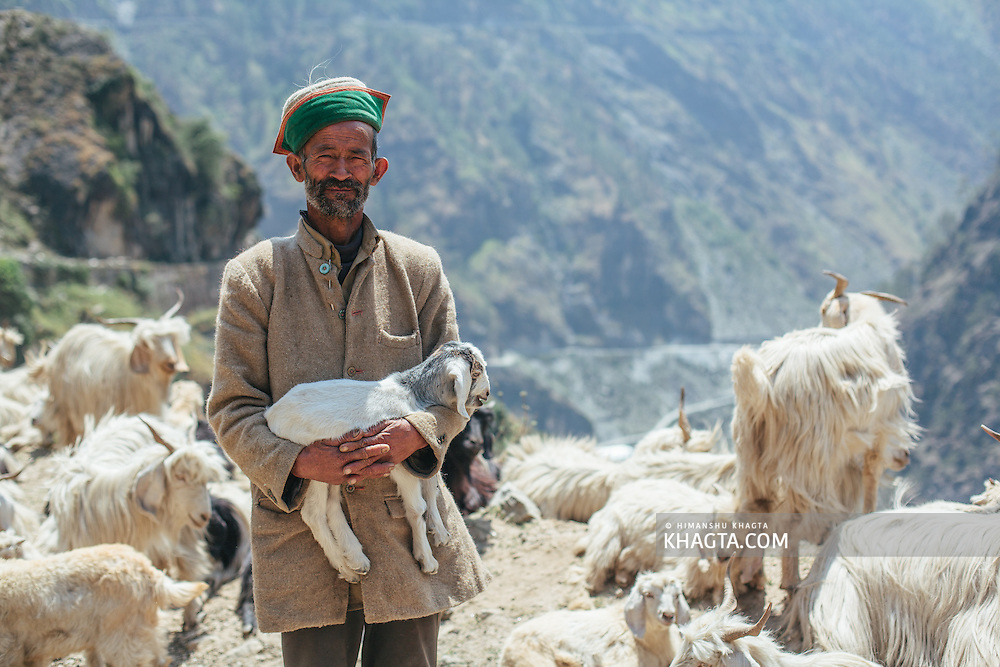 A goatherd holding a kid while hearding his goats near Tranda on the National Highway 22