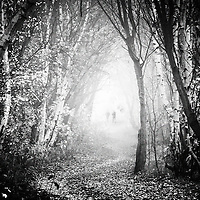 A natural Hollow of trees with a path running through, in fog.  two walkers can be seen in the distance.