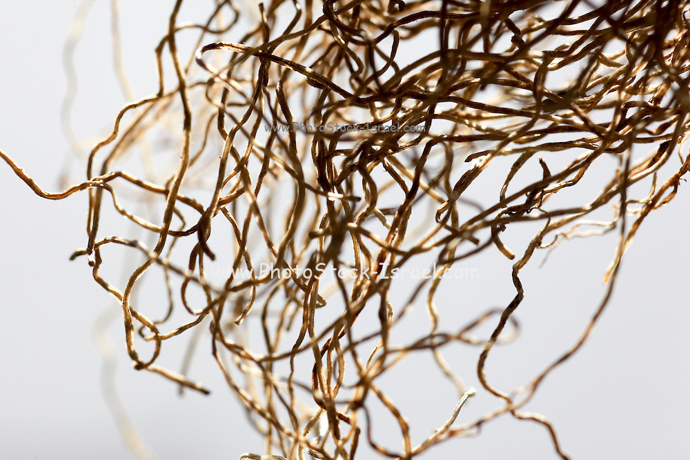Tangled Roots - Close up
