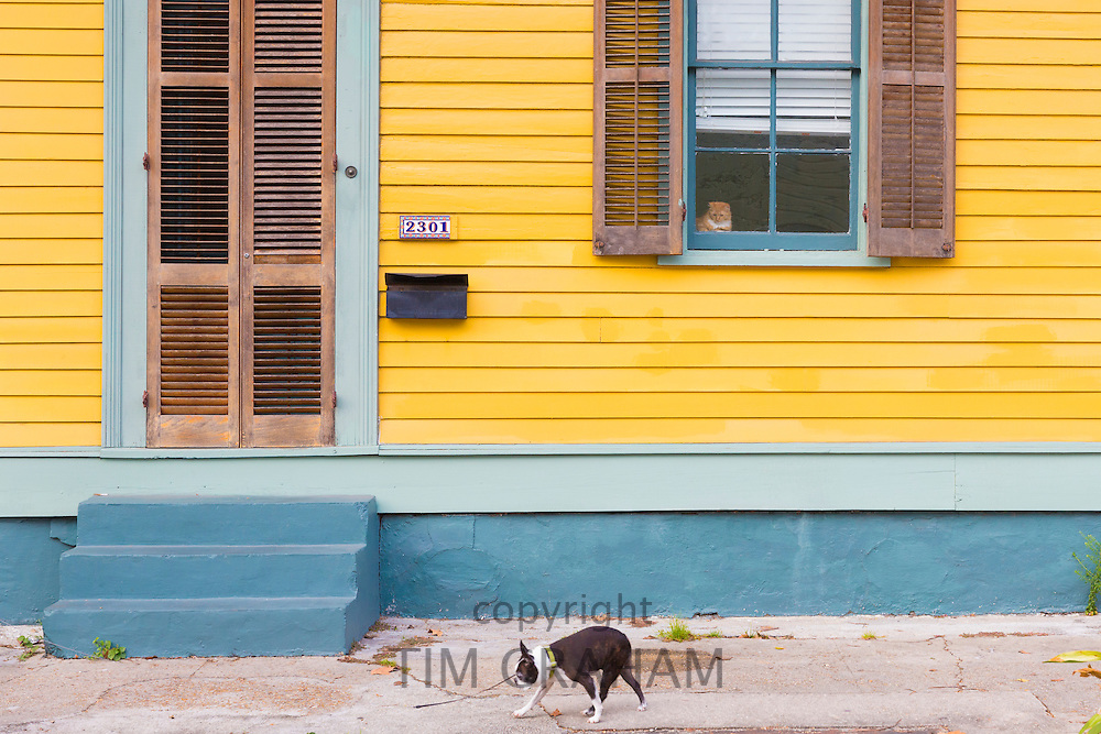 Cat safe at home alert and watching dog pass on sidewalk in Faubourg Marigny historic district  of New Orleans, USA