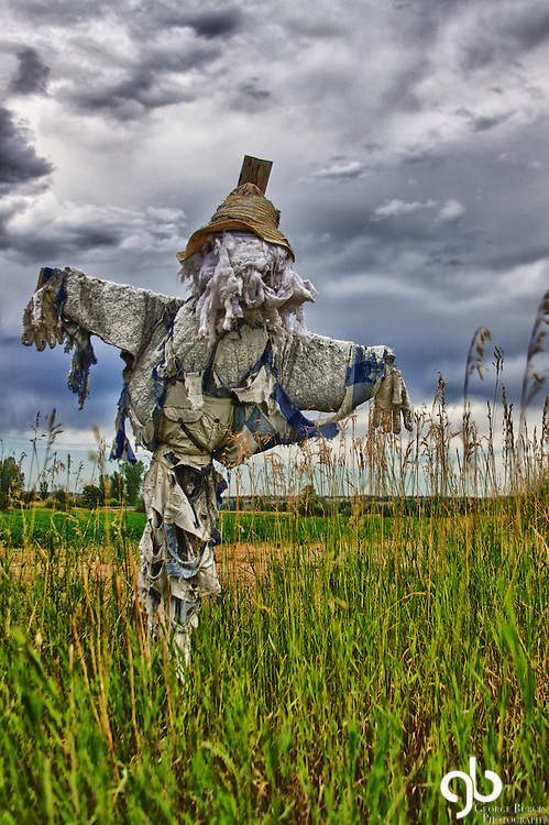 I was out today looking for barns and found this scarecrow.  I love it...