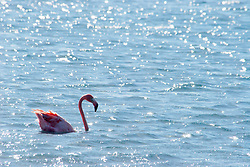 Flamingos of Bonaire