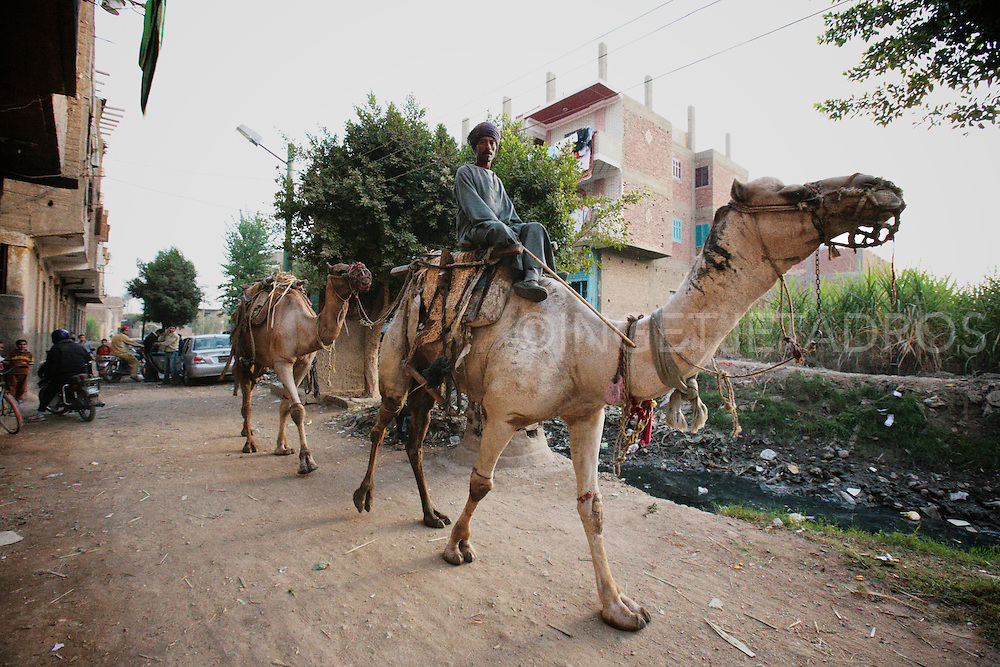 Camel Captured moments in my favourite village Bahgura  in Upper Egypt, the first time i came here was in 1985 and every time i return to Egypt i visit and drink coffee and smoke a water pipe with the old man.