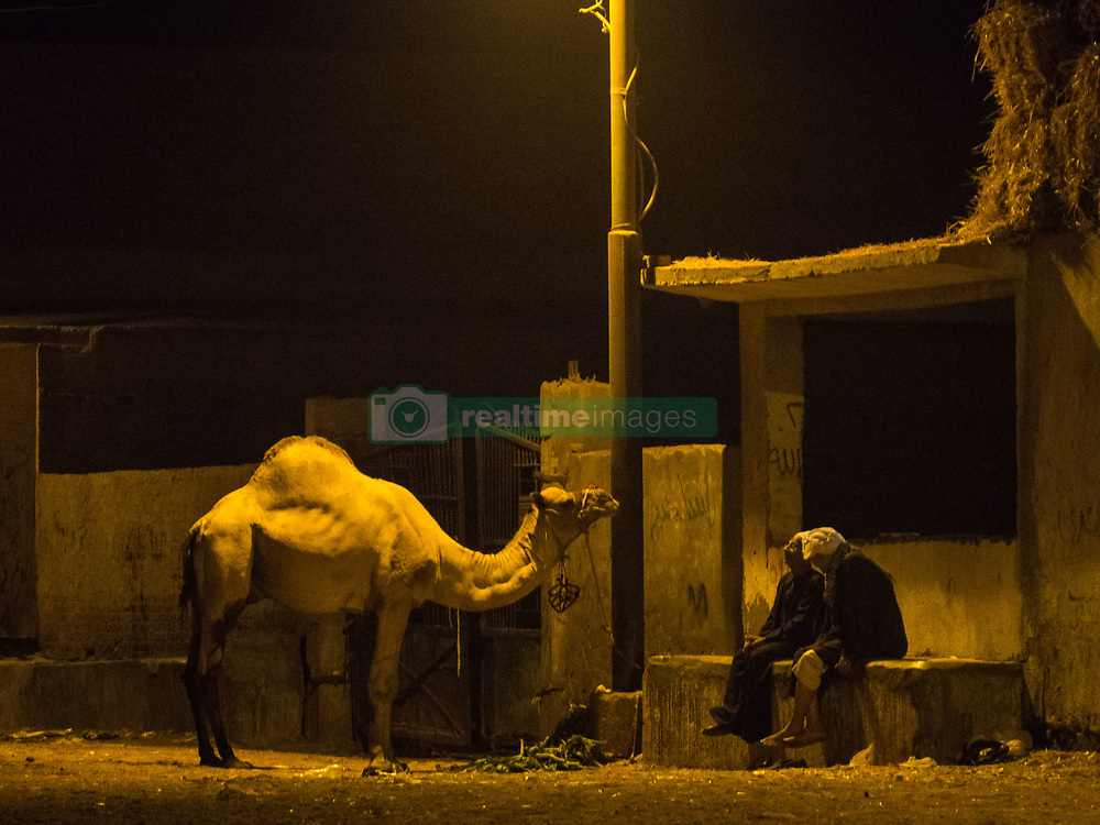 August 27, 2017 - Giza, Berqash, Egypt - general view for camels market ahead of Eid Al-Adha in Berqash district, in Giza governorate, Egypt, 27 August . Millions of Muslims around the world prepare to celebrate Eid al-Adha, which falls on 1 September 2017, by slaughtering goats, sheep and cattle in commemoration of the Prophet Abraham's readiness to sacrifice his son to show obedience to God. (Credit Image: © Fayed El-Geziry/NurPhoto via ZUMA Press)
